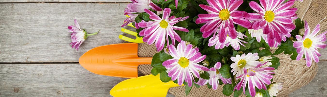 חנות פרחים ביבנה